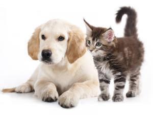 Thrombose Bei Tieren Wenn Hund Und Katze Betroffen Sind